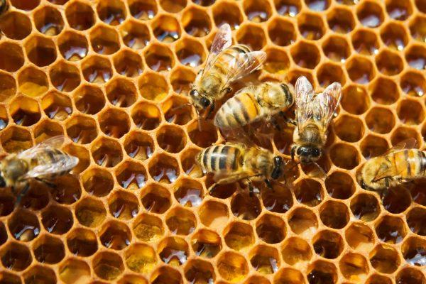 bijen op raat